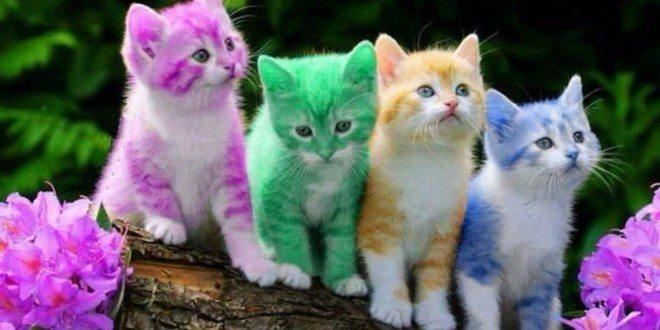 قد تصاب بالإدمان.. معلومات مدهشة عن القطط
