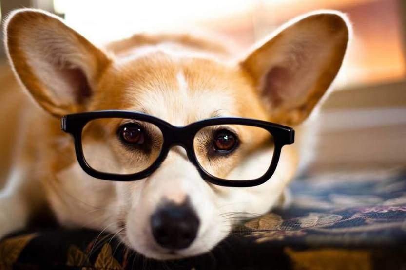 7 معلومات قد لا تعرفها عن الكلب
