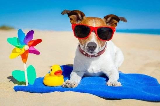 كيف تواجه الحيوانات حرارة الصيف؟