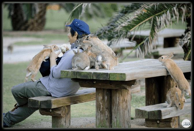 البشر والحيوانات.. علاقة بلا حواجز في صور رائعة