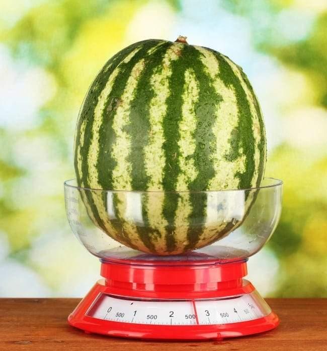 وزن البطيخة