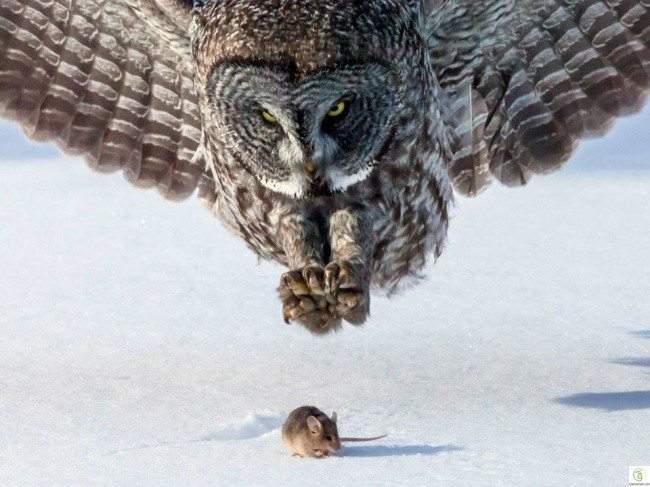 أروع صور الحيوانات والطيور من حول العالم