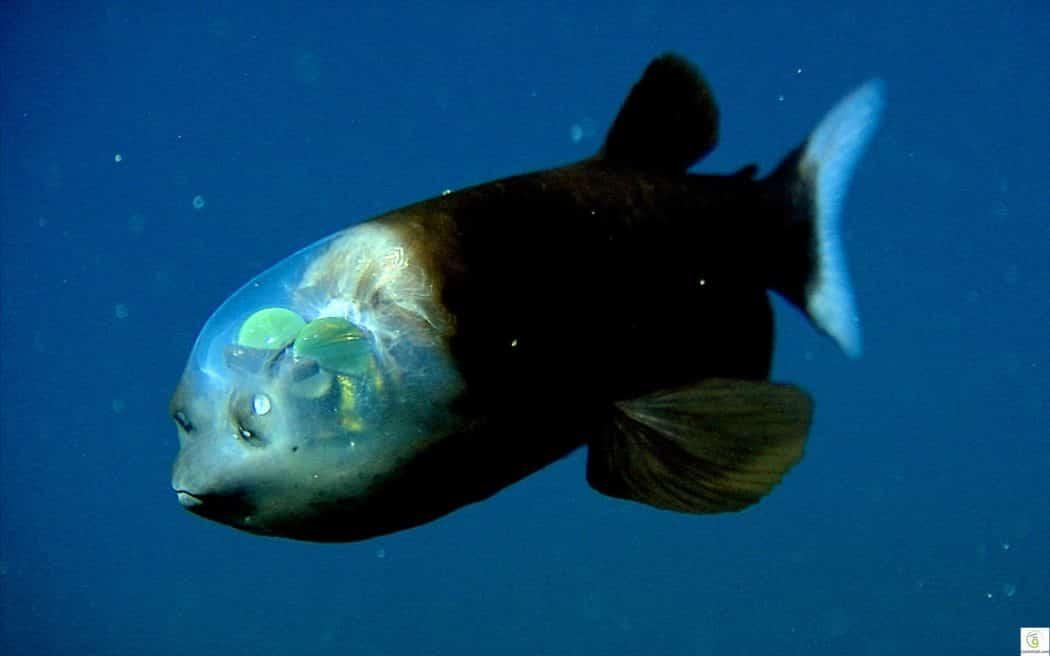 أغرب الكائنات البحرية التي تسكن أعماق المحيطات