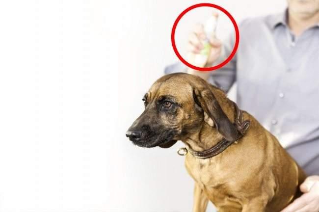 أخطر الأشياء التي ينبغي حظرها عن حيوانك الأليف تماما