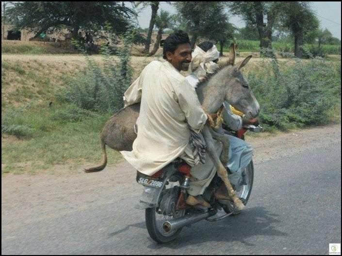 أغرب قوانين المرور حول العالم..لا تحمل حمارك على الدراجة
