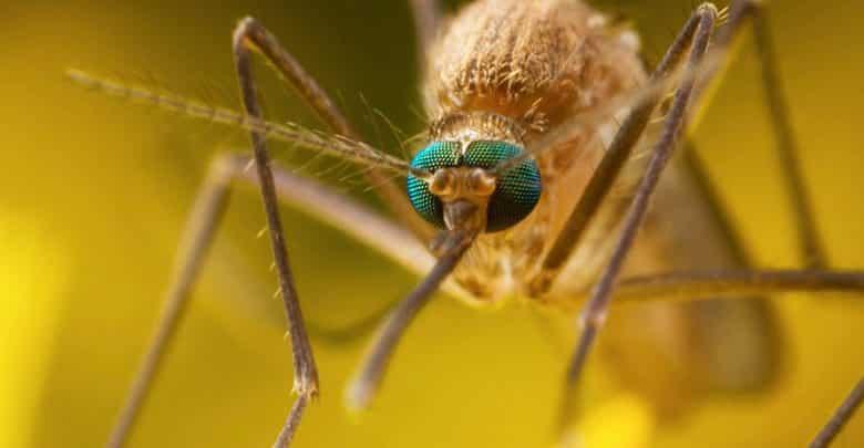 8 طرق فعالة لعلاج لسعات البعوض