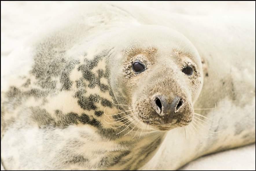 لقطات مميزة لحيوان الفقمة المنتشر بجزيرة سابل