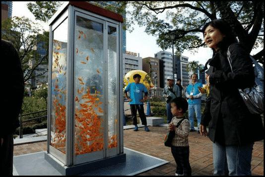 في كوكب اليابان.. كابينة الهاتف حوض للأسماك الذهبية! 2