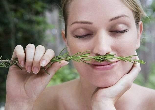 دراسة تكشف: علاقة مذهلة بين رائحة الروزماري والذاكرة