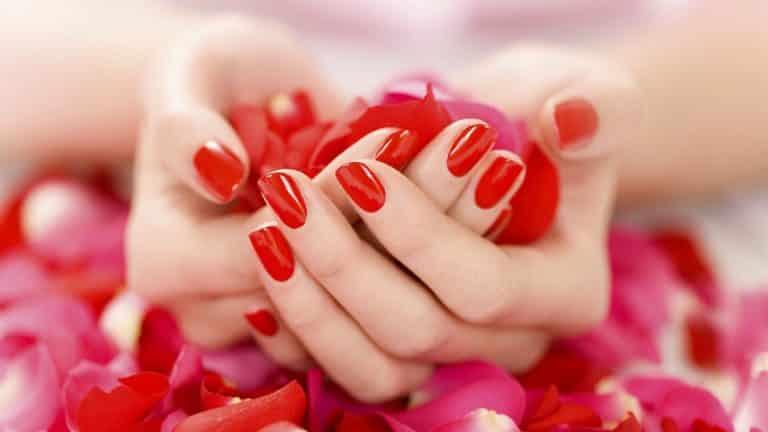 الورد جميل.. وفوائده أجمل وأكثر من مجرد الزينة