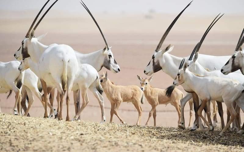محمية المرموم في دبي الأكبر عربيا.. فما يميزها؟