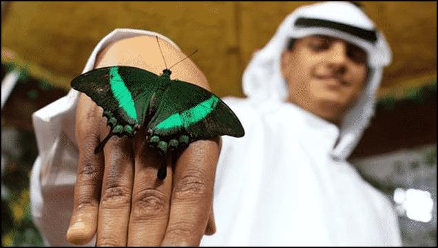 الأكبر من نوعها في العالم.. رحلة في حديقة الفراشات بدبي 2