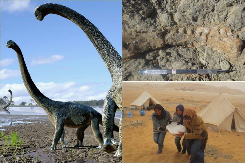 """""""منصوراصوروس"""".. الاكتشاف المصري للحلقة المفقودة في تاريخ الديناصورات"""