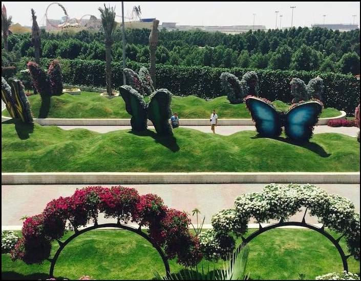 الأكبر من نوعها في العالم.. رحلة في حديقة الفراشات بدبي 3