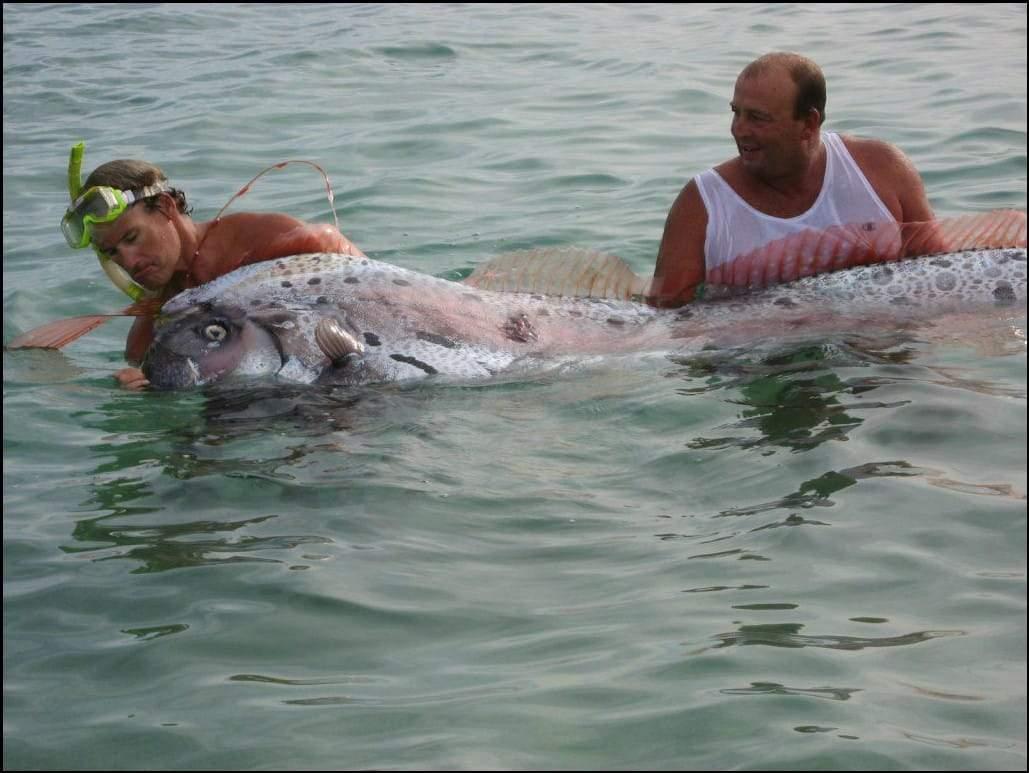 صورة السمكة العملاقة.. حقيقة أم فوتوشوب؟
