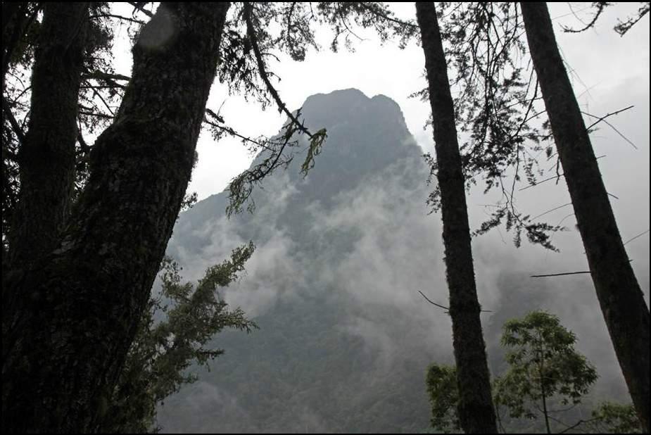 زيارة إلى وادي كوكورا.. وأغرب أشجار النخيل في العالم 3