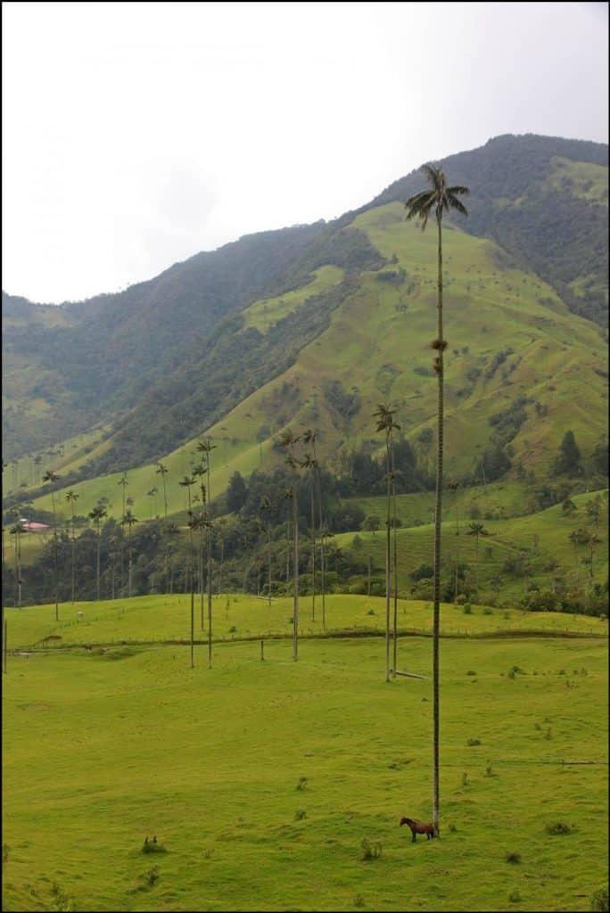 زيارة إلى وادي كوكورا.. وأغرب أشجار النخيل في العالم 2