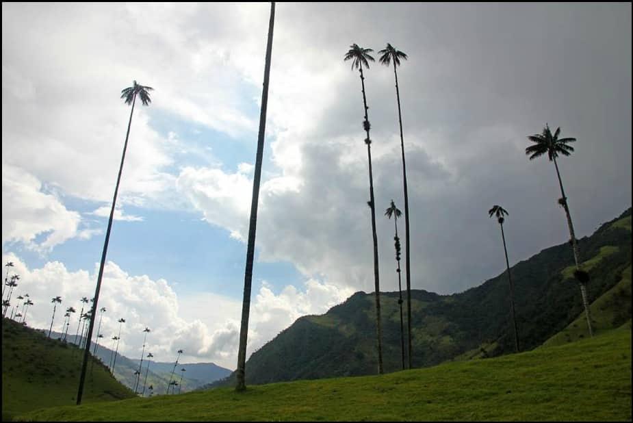 زيارة إلى وادي كوكورا.. وأغرب أشجار النخيل في العالم 1