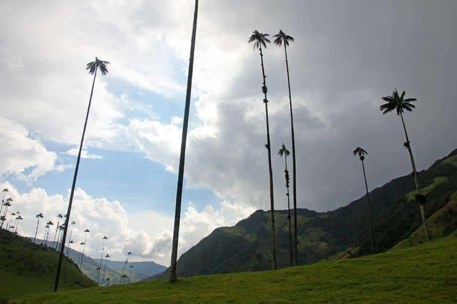 زيارة إلى وادي كوكورا.. وأغرب أشجار النخيل في العالم