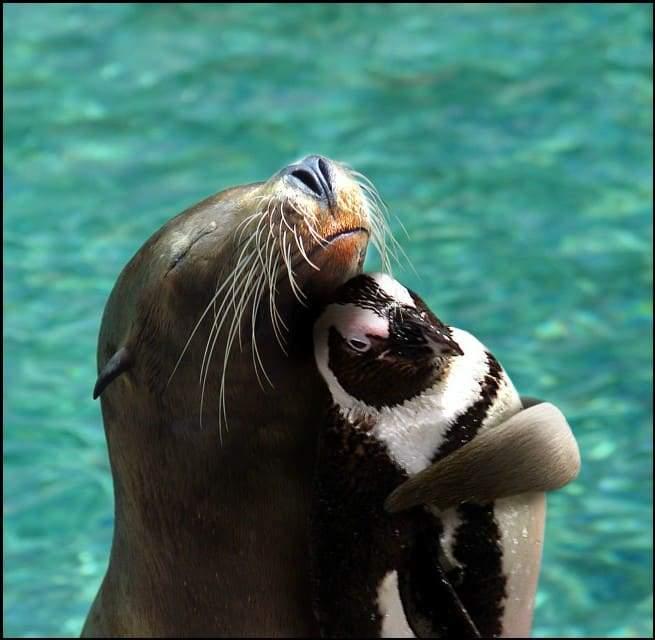 صداقات مفاجئة بين فصائل مختلفة من الحيوانات 1