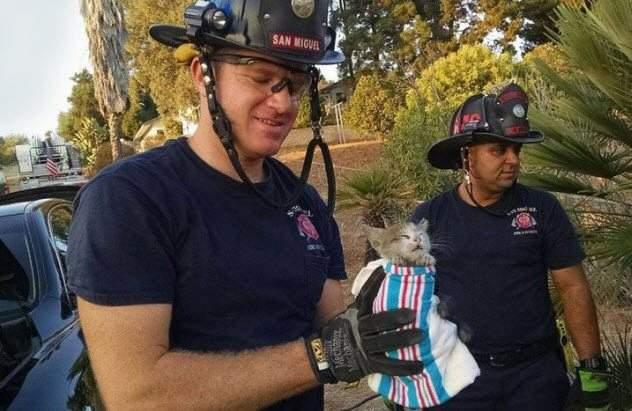 قطط استهلكت أرواحها السبعة في أغرب عمليات الإنقاذ