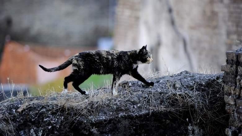 """""""ستيوي"""" يقود المراكز البحثية لعالم القطط السري"""