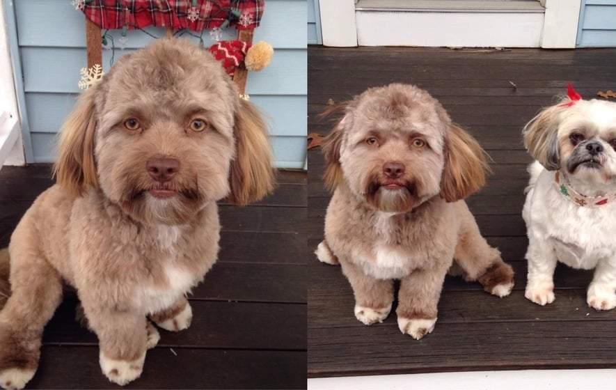 الجرو يوجي العجيب.. جسد كلب ووجه بشري