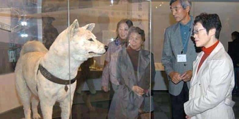 """الكلب """"هاتشيكو"""".. رمز الوفاء الذي انتظر صاحبه 10 سنوات أمام محطة القطار"""