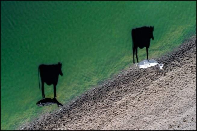 أروع الصور الملتقطة من طائرات الدرونَ