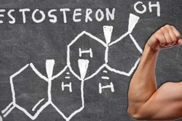 """""""التستوستيرون"""".. طرق طبيعية لتحسين إفراز هرمون الذكورة"""