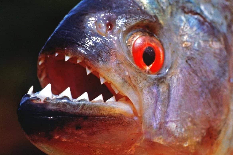 """""""خطر تحت الماء"""".. أسماك قاتلة تهدد حياة الإنسان"""