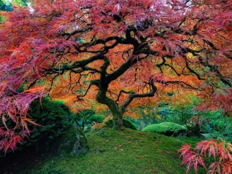 أغرب 10 أشجار حول العالم