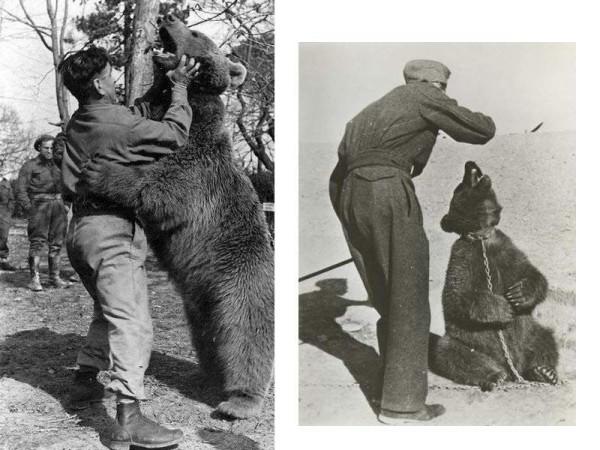 """العريف فويتك.. """"دب"""" يقود البولنديين للنصر في الحرب العالمية الثانية"""
