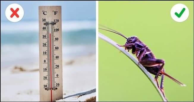 الصراصير لقياس الحرارة.. وأغرب الحيل العملية الفعالة 1