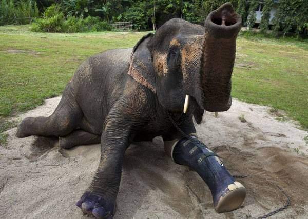 في تايلاند.. أول مستشفى لعلاج الأفيال في العالم