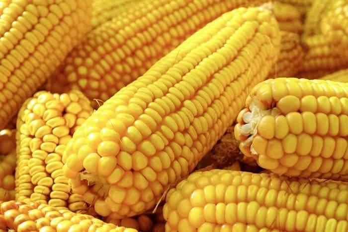 للتسلية وأشياء أخرى.. فوائد الذرة الصحية المتنوعة