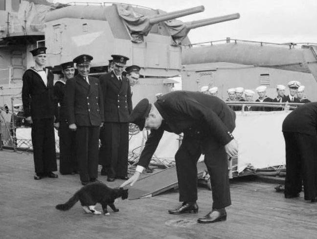"""""""القط سيمون"""".. أنقذ سفينة حربية وحصل على وسام الشجاعة"""