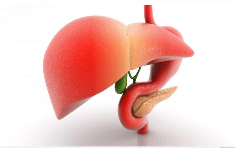أطعمة ومشروبات تحافظ على صحة الكبد بفاعلية