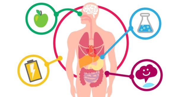 حرق الدهون والحياة بوزن مثالي.. ماذا تعرف عن الأيض؟ 1