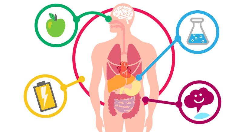 حرق الدهون والحياة بوزن مثالي.. ماذا تعرف عن الأيض؟