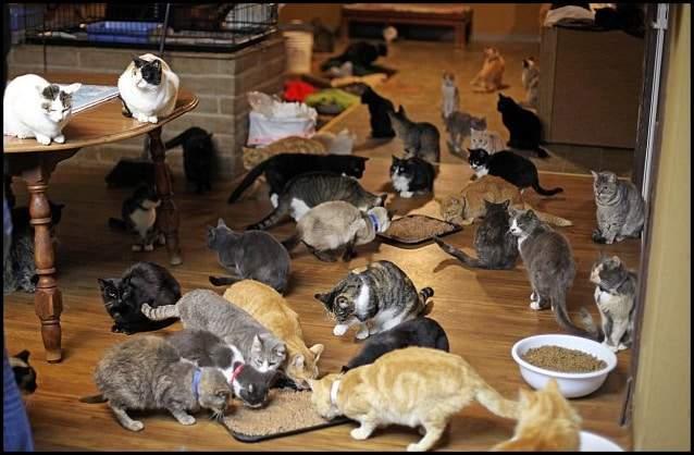 المرأة التي تنازلت عن قصرها لآلاف القطط 2