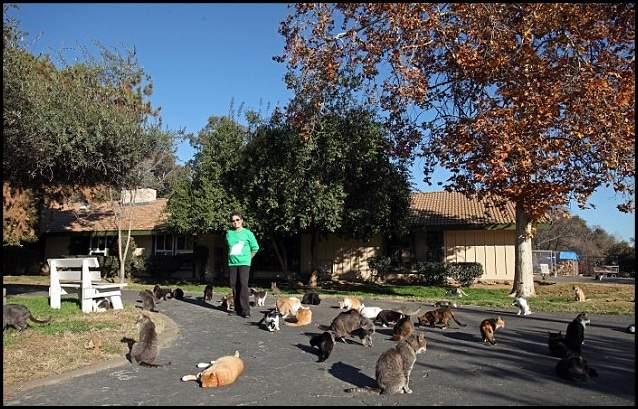 المرأة التي تنازلت عن قصرها لآلاف القطط 3