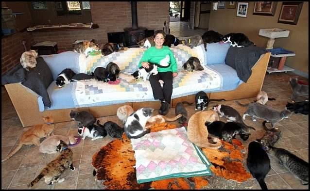 المرأة التي تنازلت عن قصرها لآلاف القطط 1