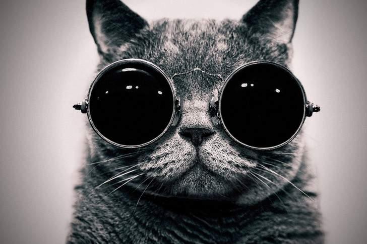 المشروع كيتي .. القطط جواسيس الولايات المتحدة على روسيا