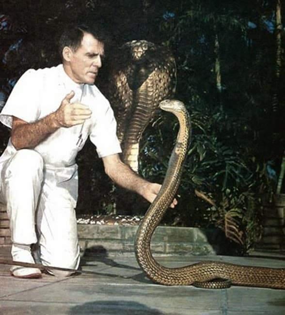 بيل هاست.. لدغته الثعابين 173 مرة فصارت دماؤه مصلا