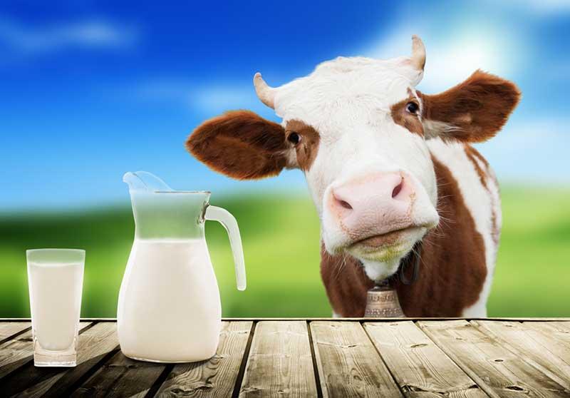 شرب الحليب يساعد على النوم.. حقيقة أم أسطورة؟