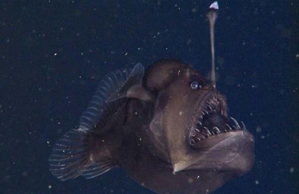 الأسماك المضيئة.. مصابيح تتوهج في قاع المحيط