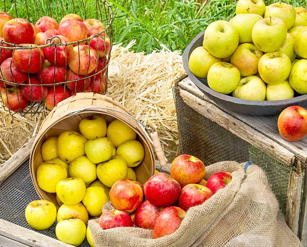 التفاح على رأس مائدة السحور؟