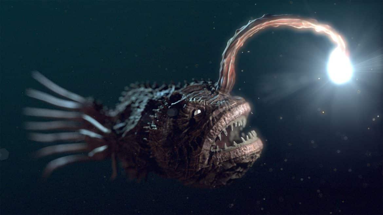 الأسماك المضيئة.. مصابيح قاع المحيط