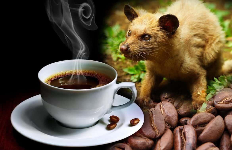 كيف تحضر القهوة الأغلى في العالم؟ الإجابة صادمة!